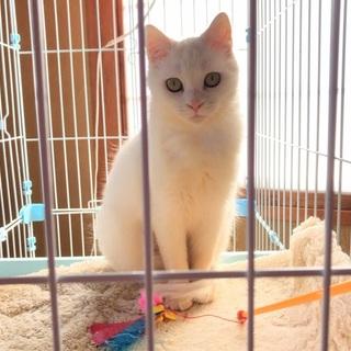 穏やかで可愛い白猫です。只今トライアル中です。