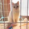 穏やかで可愛い白猫です。里親様決定。感謝致します。