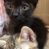 落ち着きのある子猫⁉️ファニーちゃん♀ サムネイル2
