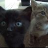 黒猫ちゃん♡3匹兄弟で産まれました(=^x^=)