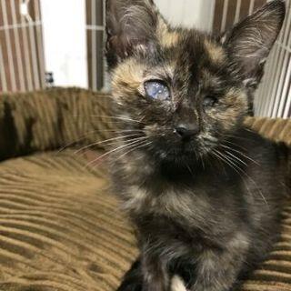 酷い飼育状況で、片目を失った子猫