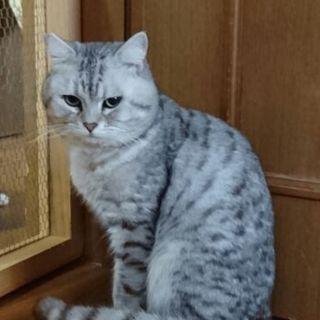 劣悪な環境で生きてきた猫