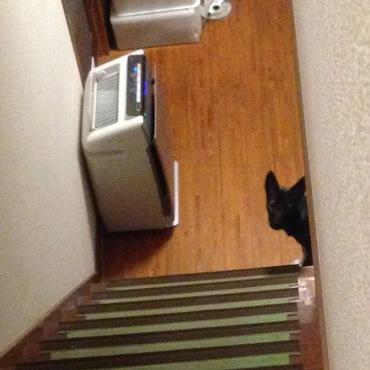 隙間が空いてる階段だからのぼれないー