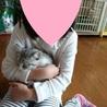 性格バツグン、愛らしい子猫「マリオ」 サムネイル2