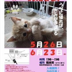 猫の譲渡会  5月26日、6月23日