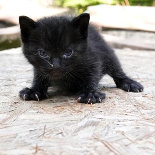 シャイで控えめ、優しい黒豹ちゃん♪