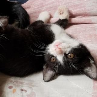 子猫2ヶ月、生涯幸せにしてくださる方