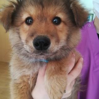 ふわもふの可愛い子犬