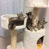cat first