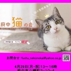 保護猫広場ラブハピ営業日のお知らせ