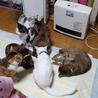 きーちゃんち  子猫担当 山(保護活動者)
