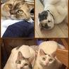 野良猫さんの去勢手術について