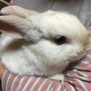 可愛いウサギさんの里親さんを募集します