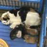 岩国市健康福祉センター 三毛+子猫5匹 サムネイル2