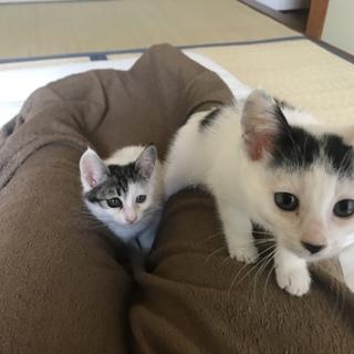 生後二ヶ月の美人姉妹