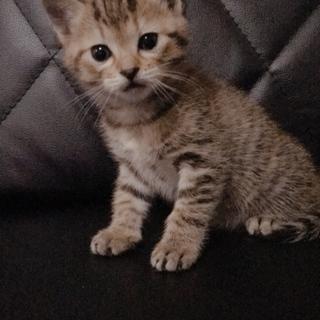 3月15日生まれの女の子猫