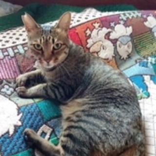 残されたシニア猫、ゴンちゃん