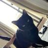 里親募集 ! 黒猫のティグマ