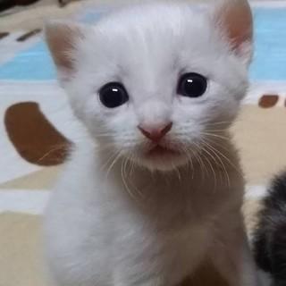 しろくまちゃん☆離乳食対応できる方希望