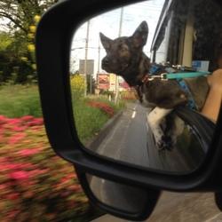 「車の窓から出ちゃうよ⊛⧢⊛」サムネイル3