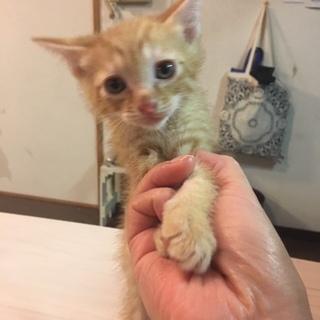 【生後1か月子猫】里親募集
