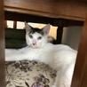 白黒キジで珍しい柄の美ネコくんです! サムネイル3