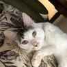 白黒キジで珍しい柄の美ネコくんです! サムネイル5