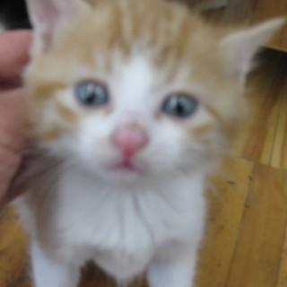 OS-723 可愛い子猫です。