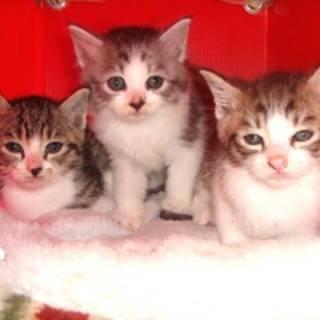 可愛い3兄妹が家族を待っています!