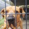 大型犬ですが性格花マルです❣️ サムネイル2