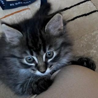とても可愛い子猫が3匹生まれました