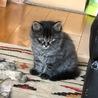 とても可愛い子猫が3匹生まれました サムネイル3