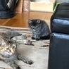 とても可愛い子猫が3匹生まれました サムネイル5
