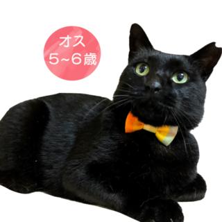 【単身者・猫飼育初心にもオススメ!】穏やか黒くん♪
