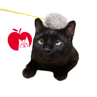 より目がチャームポイント!りんご猫の黒くん