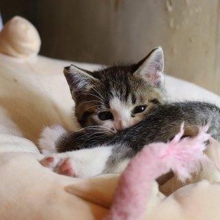 人馴れバツグン可愛い仔猫さんです。