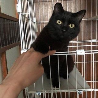 とても人懐こい黒猫。可愛い男の子です。