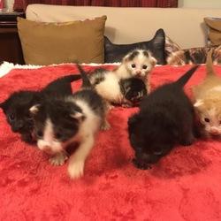 産まれたて子猫ちゃん六匹