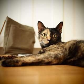 個性派サビ猫のニカちゃん
