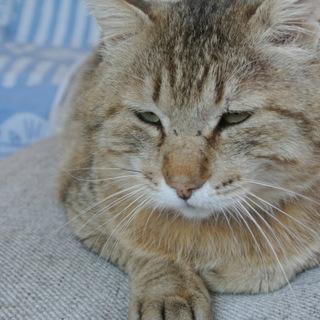 親分肌に見えるが心の優しい猫 名前はマイケル