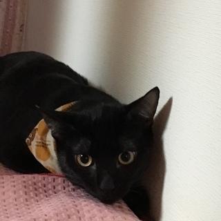 元気いっぱい黒猫 むさし