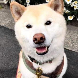 笑顔のかわいい まきわりくん♂ご家族募集中!