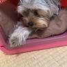 そうだ!クレートで寝るんだ!!!(;´д`)静まりたまえ〜…。