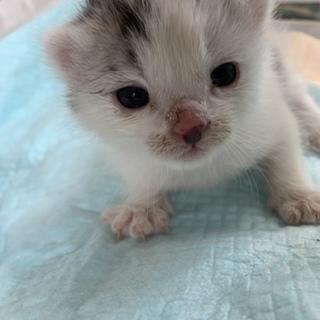 生後まもない子猫