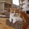 猫には優しい男!ぽっちゃり海王2号くん♂ サムネイル4