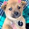 W245 可愛い子犬です。