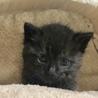 幸福を運ぶ黒猫ちゃん、コンブ君。
