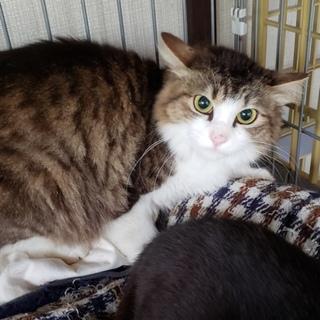 多頭飼育崩壊の猫の里親募集