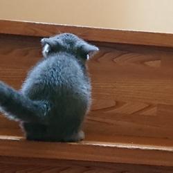 階段楽しー