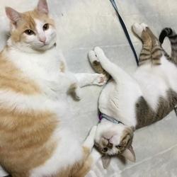 第73回 シュリのおうち犬猫譲渡会